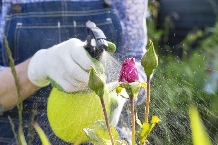 preparare insetticida bio