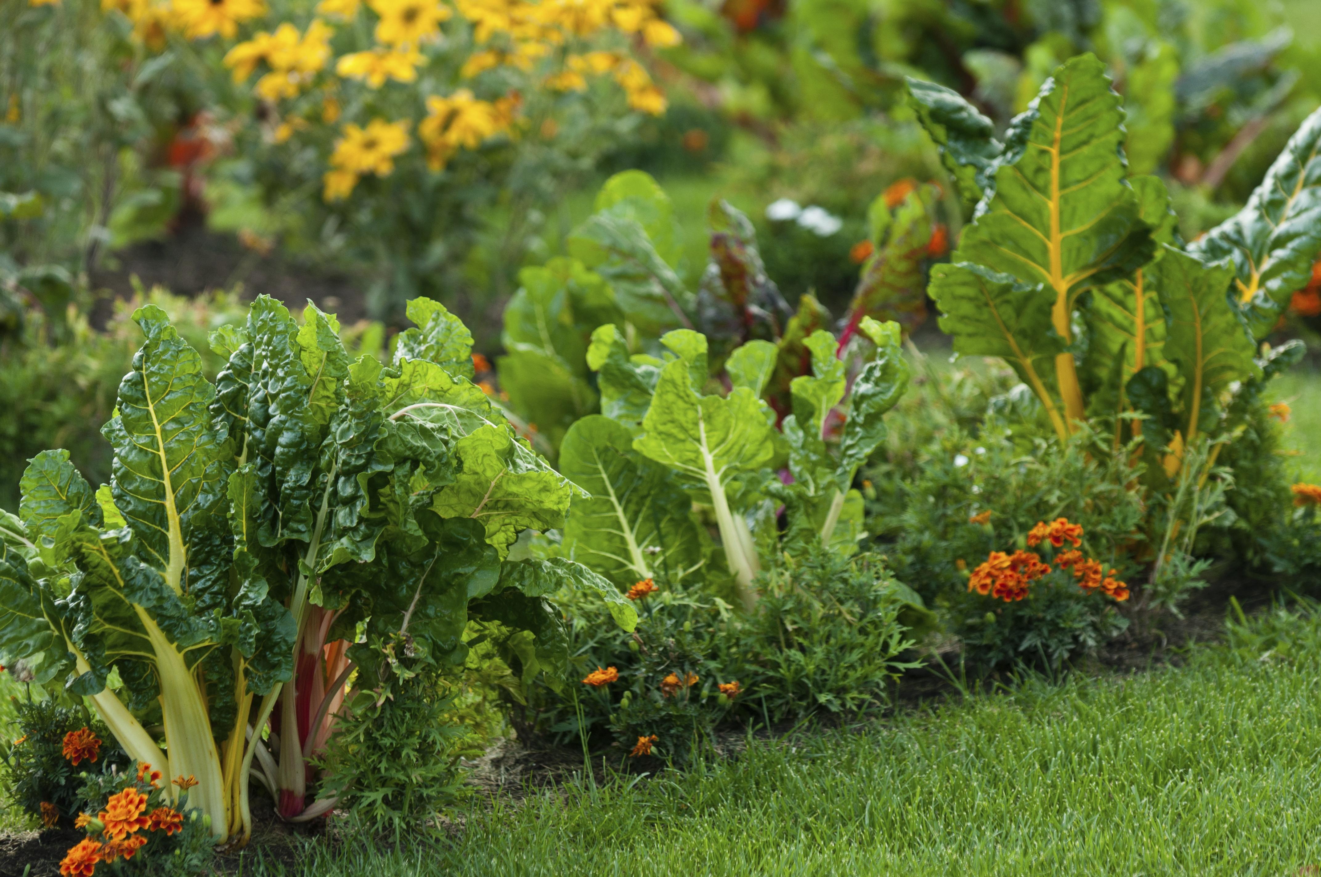 Irrigazione e prevenzione in un orto biologico