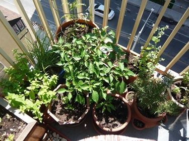 Coltivare orto sul balcone orto in balcone for Coltivare sul balcone