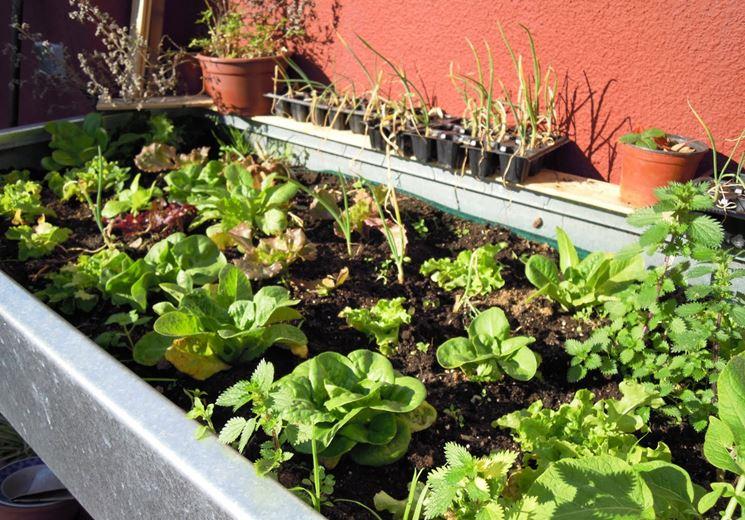Coltivare orto sul balcone orto in balcone realizzare for Orto sul balcone
