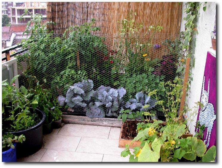 coltivazione sul terrazzo