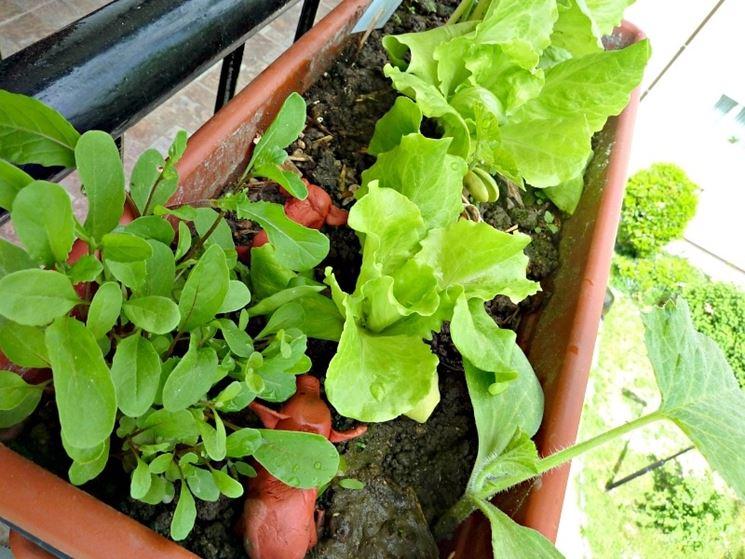 coltivare sul terrazzo