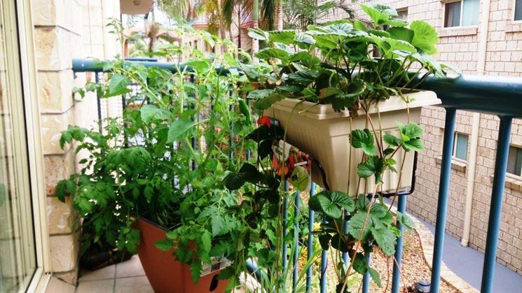 coltivazione su balcone