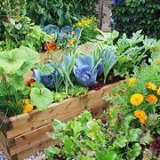 coltivare orto in terrazza