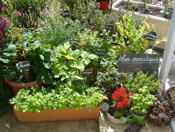 coltivare piante aromatiche in terrazza