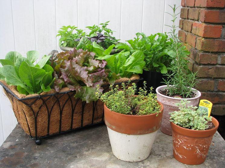 coltivare orto in vaso