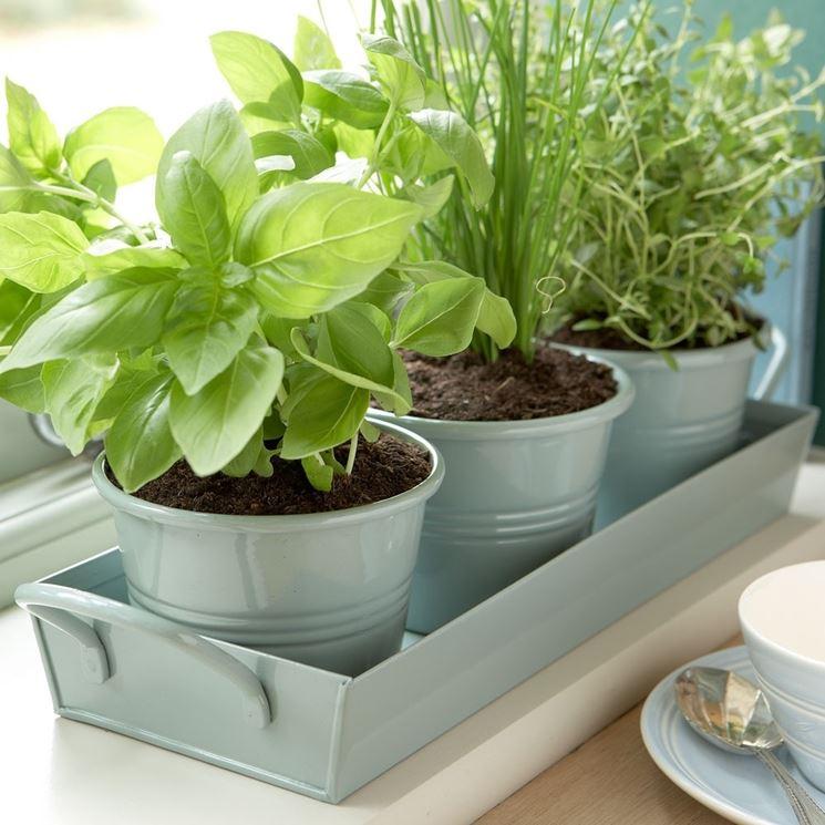Le erbe aromatiche come coltivarle conservarle usarle - Cucina sul balcone ...