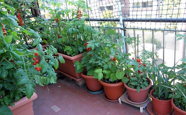 pomodori su balcone