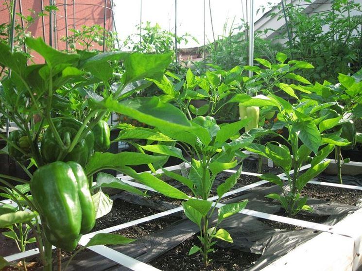 Orto nel terrazzo orto in balcone come coltivare orto for Orto sul terrazzo contenitori