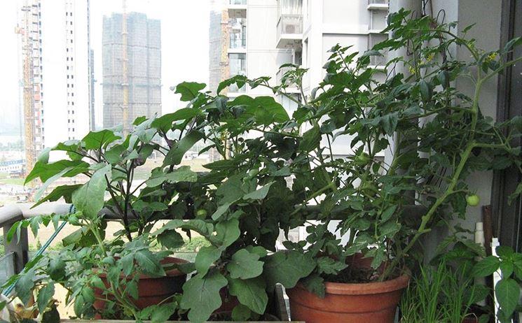 coltivare orto in terrazzo