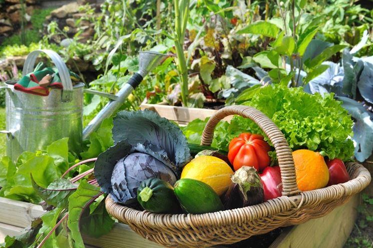 coltivare orto sul terrazzo