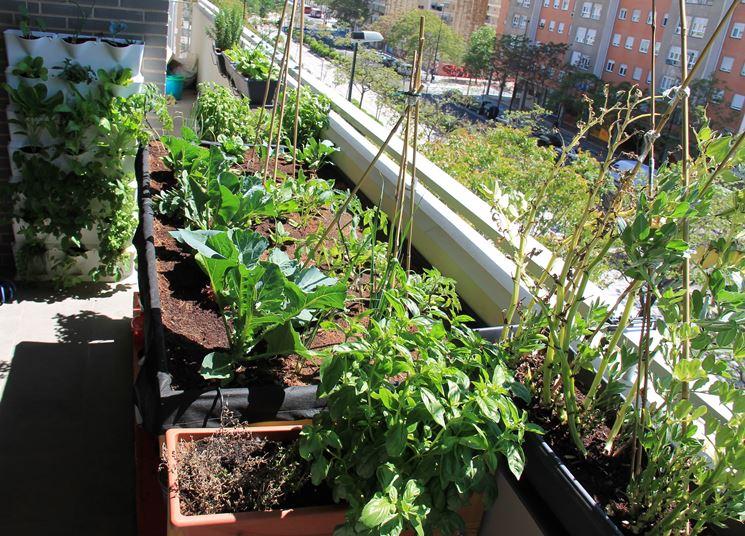 Ortensie Sul Balcone : Orto sul balcone cosa piantare in