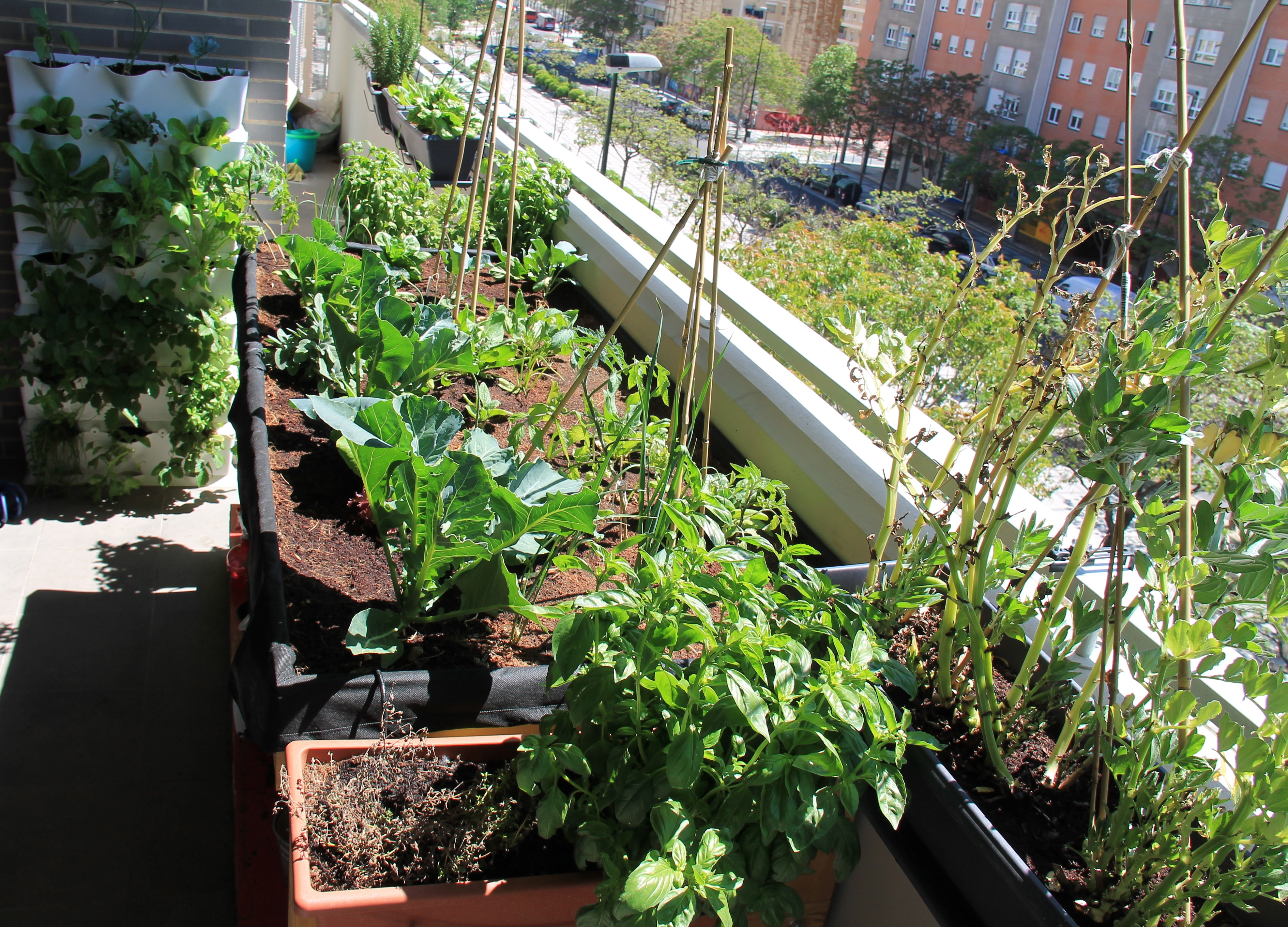 Orto sul balcone cosa piantare orto in balcone for Orto sul balcone