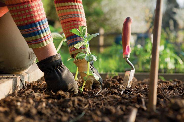 coltivazione orto sul balcone