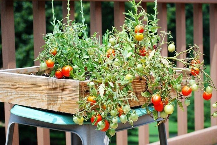 Ortensie Sul Balcone : Orto sul balcone in come coltivare l