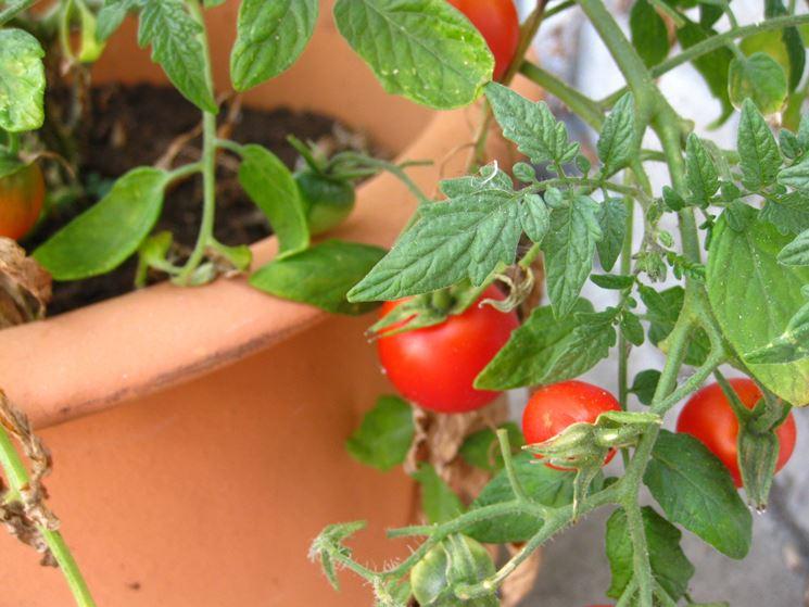 Pomodori sul terrazzo