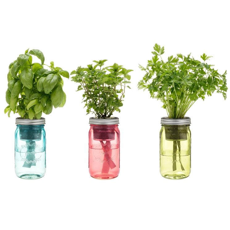 basilico e altre aromatiche