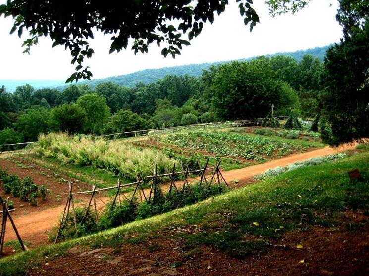 Giardino adibito ad orto