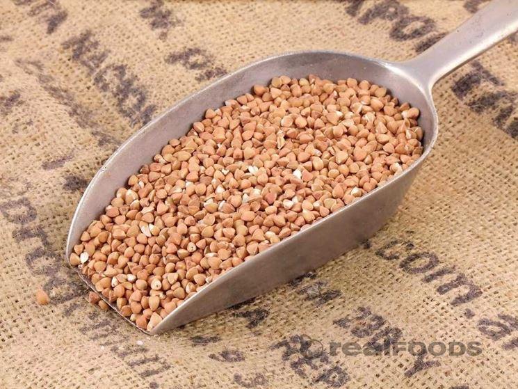 pianta di grano saraceno
