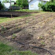 irrigazione pomodori