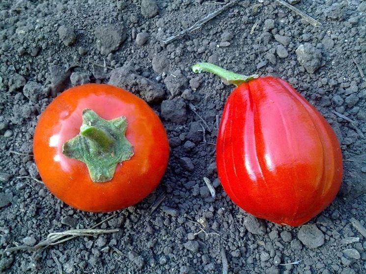melanzana rossa