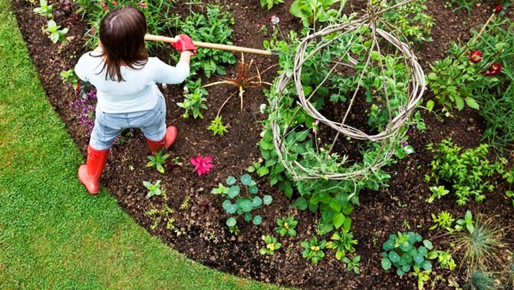 Image Result For How To Start A Veggie Garden From Scratch In South Africa
