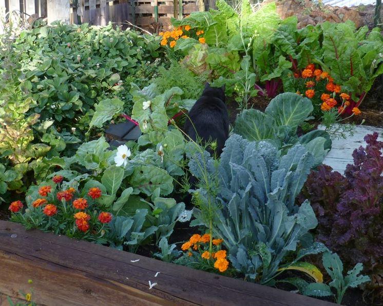 Orto di verdure miste