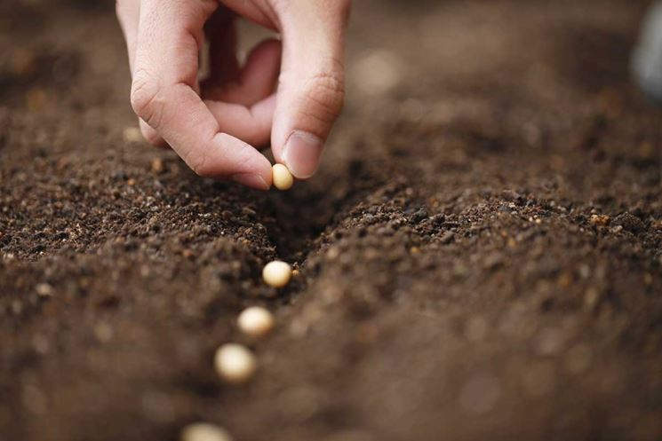 semi di ortaggi