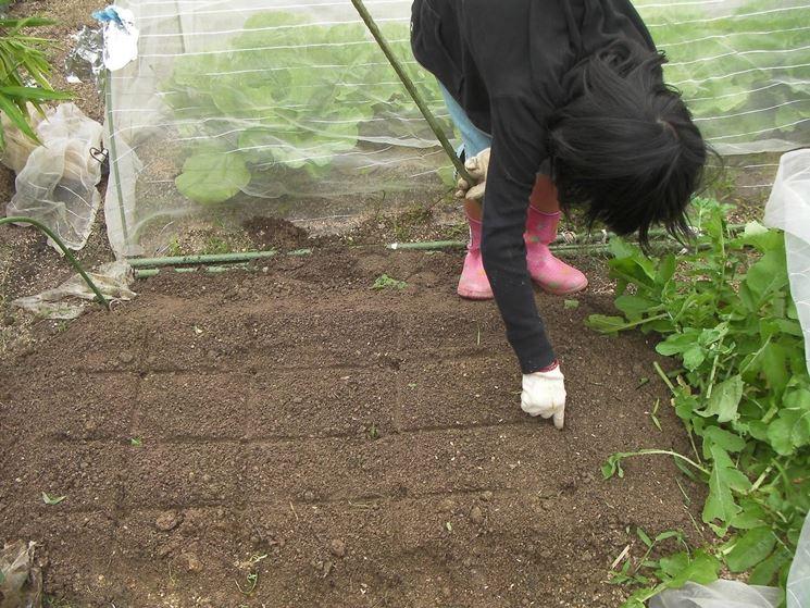 tecniche di semina