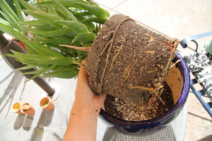 trapianto di una pianta