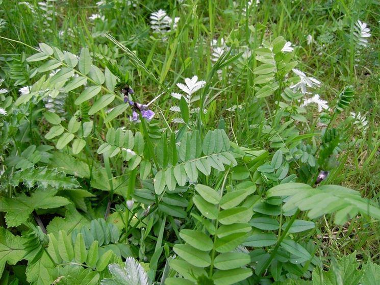 Foglie piante orto