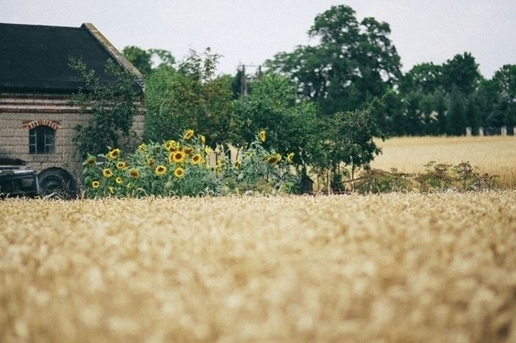 Effetto coltivazioni