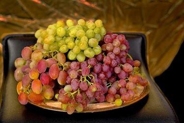 uva raccolta