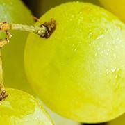 Acini di uva