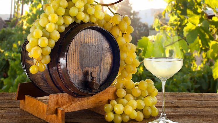 uva bianca da vino