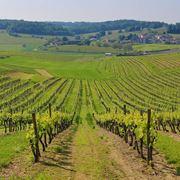 Vigneti nella regione dello Champagne