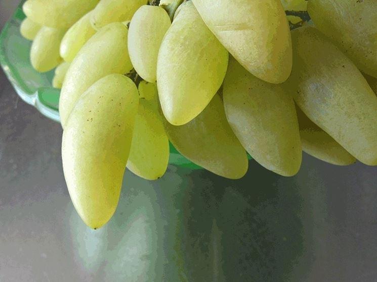 Uva da tavola uva uva da tavola ortofrutta - Uva da tavola coltivazione ...