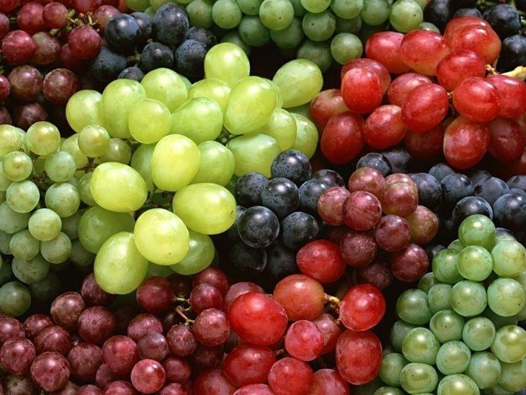 Diverse varietà di uva