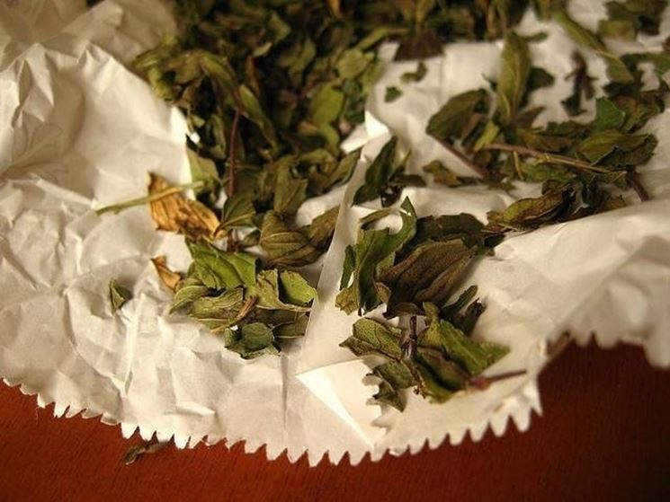 foglie di uva ursina essiccate
