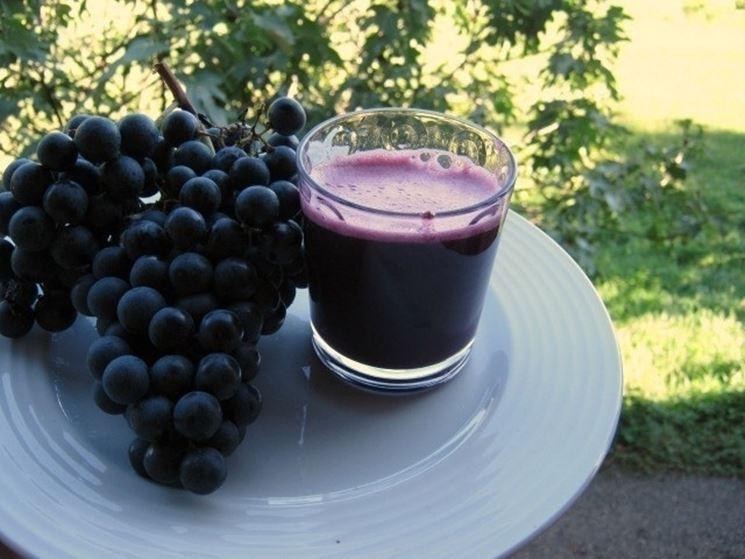 grappoli di uva da vino