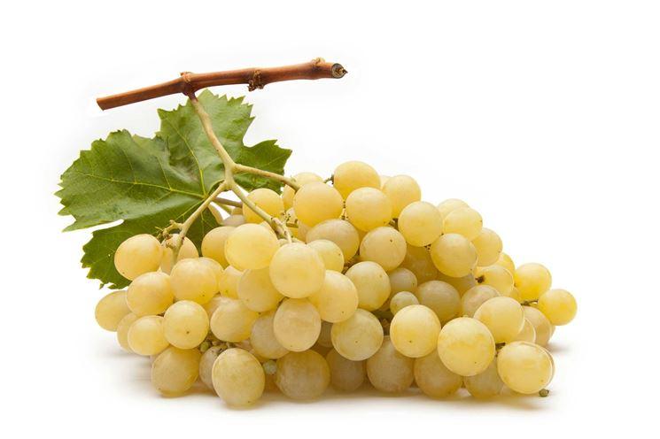 Un grappolo di uva Vittoria