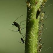malattie delle piante