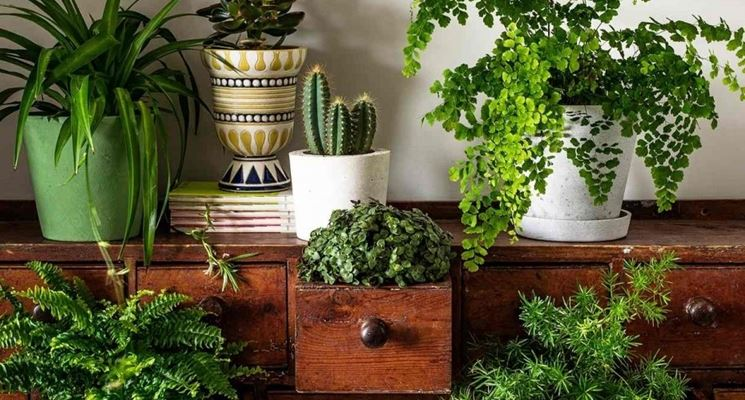 Amato Arredare con le piante - Composizione Piante - Arredare l'ambiente  IX04