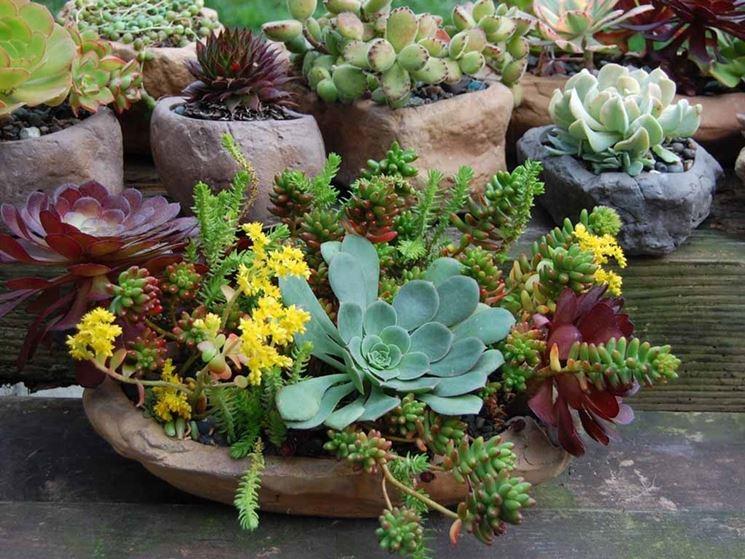 composizioni piante grasse