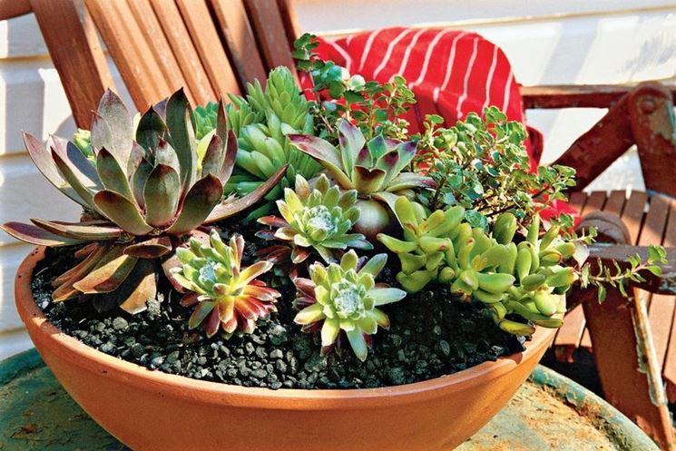 Célèbre Composizione piante grasse - Composizione Piante - Preparare  JB41