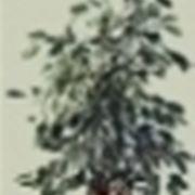 benjiamin