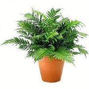 Domande e risposte piante appartamento di facile soluzione for Piante appartamento buio