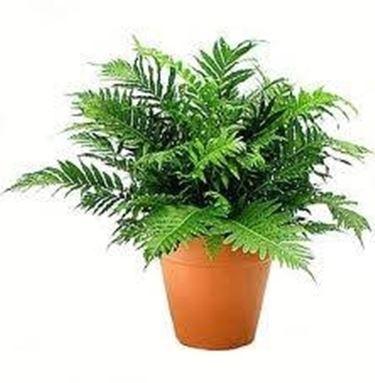 pianta interno - Domande e Risposte piante appartamento