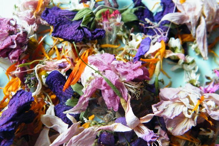 fiori essicati