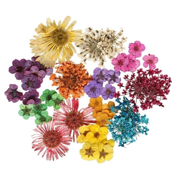 fiori secchi on line fiori secchi fiori secchi online